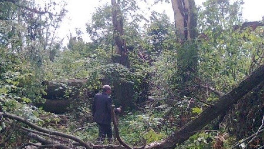 Dofinansowanie na odnowienie powierzchni leśnej