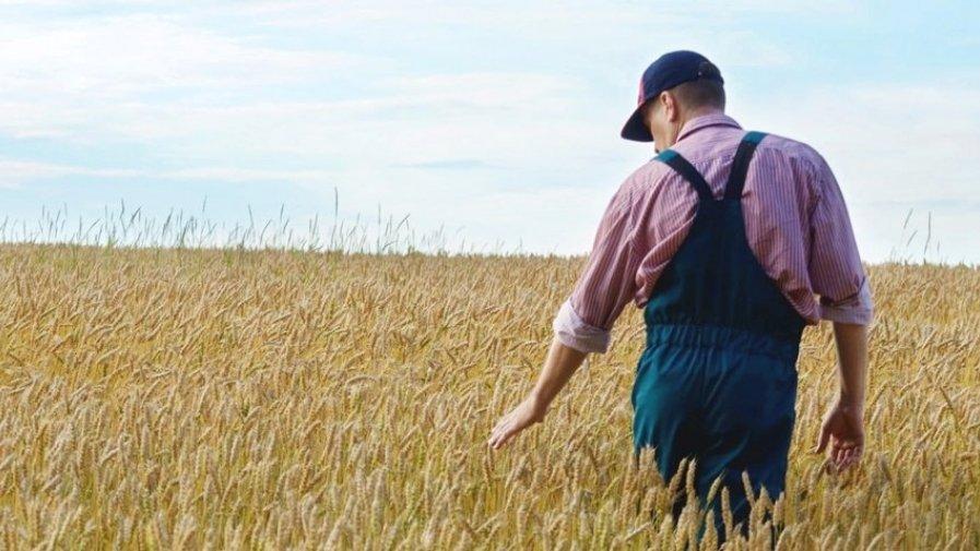 Od środy 3 czerwca do 1 sierpnia 2020 r. młodzi rolnicy będą mogli składać w ARiMR wnioski o przyznanie premii na rozpoczęcie samodzielnego gospodarowania. Pomoc finansowana jest z budżetu PROW 2014-2020.