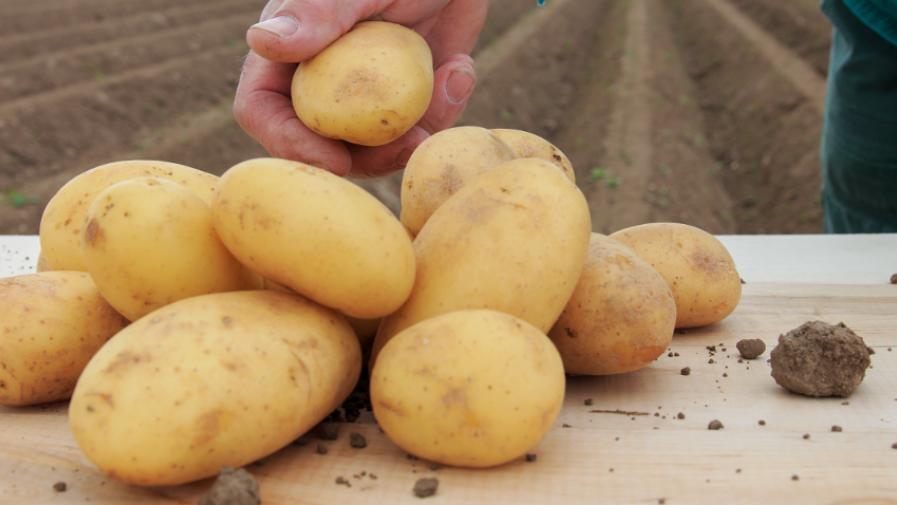 Od 25 maja do 25 czerwca rolnicy mogą składać w ARiMR wnioski o przyznanie dopłaty z tytułu zużytego do siewu lub sadzenia materiału siewnego kategorii elitarny lub kwalifikowany za rok 2020.