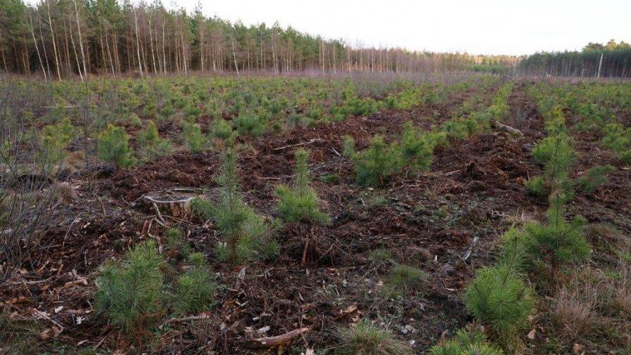 Posadź własny las i weź pieniądze – nabór wniosków dobiega końca