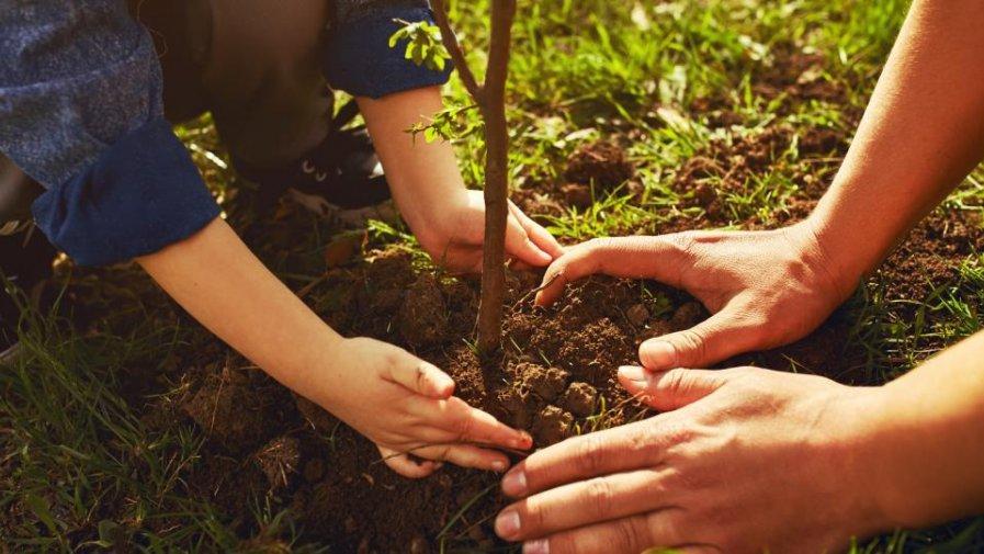 Drzewa są potrzebne wszędzie tam, gdzie żyjemy, nie tylko w lesie. Dzięki inicjatywie Prezydenta Rzeczypospolitej Polskiej i Pierwszej Damy teraz wszyscy mogą z łatwością posadzić własne drzewo.